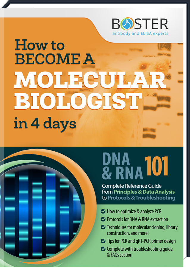 Get your free Handbook about the Molecular Biology-Tecnique